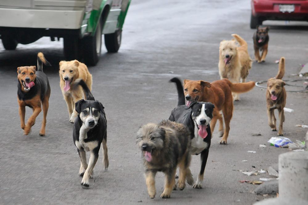 perros sin nombre